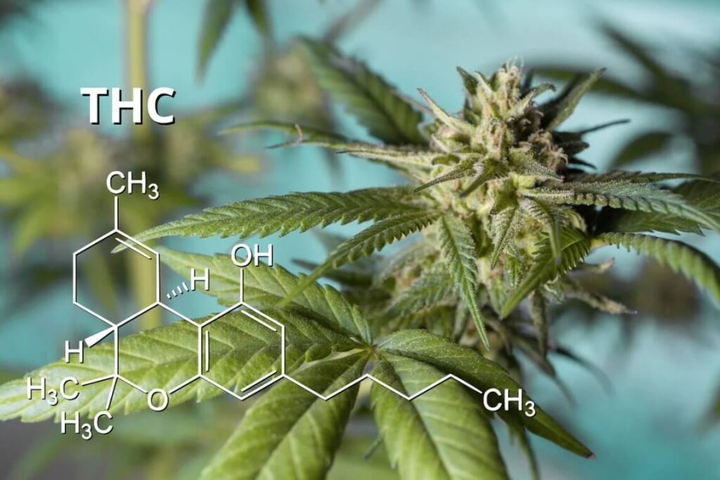 Does hemp extract have THC