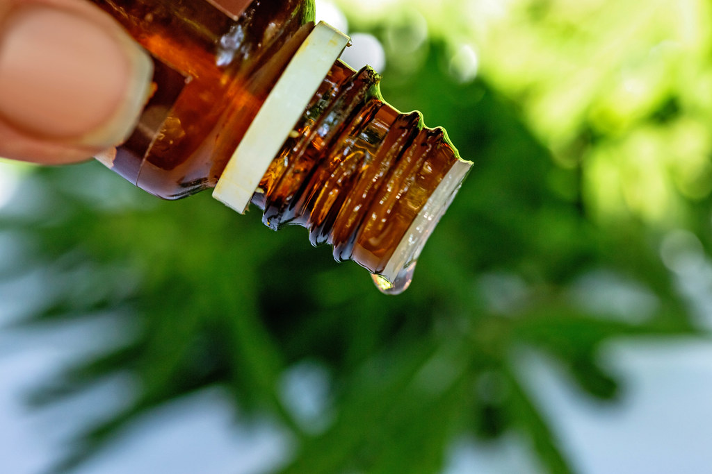 How to extract CBD oil